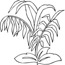 rainforest plants coloring pages aecost net aecost net