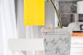 comment faire partir des moucherons dans une cuisine comment se débarrasser des moucherons toutes les astuces