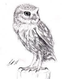 little owl sketch by mostly harmful on deviantart