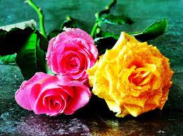 November Flowers November 4 2016 Wallpapers Mouguets Rose Leaves Orange Beautiful