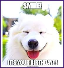Birthday Dog Meme - happy birthday memes with funny cats dogs and cute animals