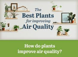 best plants for air quality infographic best plants for removing indoor toxins inhabitat