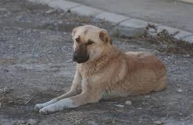 target mays landing black friday 10 stories of lifesaving dogs mental floss