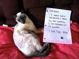 i r 99 cat pictures
