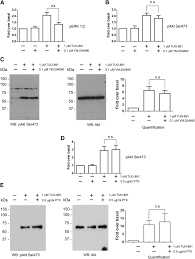 distinct phosphorylation clusters determine the signaling outcome