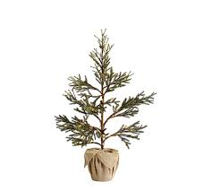 lit potted pine trees pine tree pine and