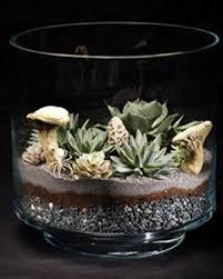 succulents terrarium garden club