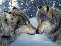 wolf meaning and symbolism all totems spirit meanings