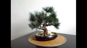 Fake Tree by Fake Plastic Tree Artificial Bonsai Youtube