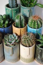 263 best cacti and succulents images on pinterest plants cactus
