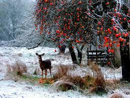 beautiful winter scenery free best hd wallpapers
