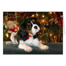 cavalier king charles spaniel cards invitations
