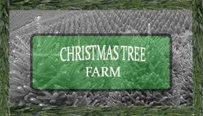 christmas tree farm plantations bl christmas trees