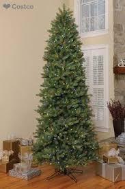 slim christmas tree with led colored lights beautiful indoors or outdoors this holiday birch tree from costco