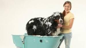bagno per cani una vasca speciale per lavare i cani