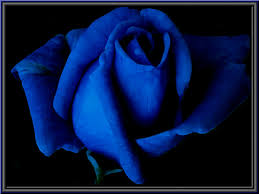 Blue Roses For Sale Blue Rose A Photoexperiment With Psp Xi Elbfoto Flickr