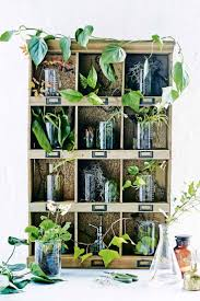 386 best indoor u0026 office plants images on pinterest office