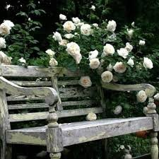 Old Wooden Benches For Sale Best 25 Wooden Garden Benches Ideas On Pinterest Wooden Garden