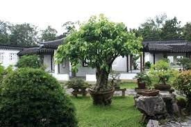 Bottle Garden Ideas Bonsai Garden Ideas Bonsai Botanical Garden Suitable With Bonsai