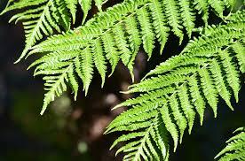 Free Picture Leaf Nature Fern Free Photo Fern Plant Leaf Nature Green Free Image On Pixabay