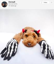 Dog Skeleton Halloween 24 Of The Most Adorable Halloween Pet Costumes That Will Make You