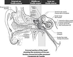 Attic Ear Anatomy Wsiat Hearing Loss And Tinnitus