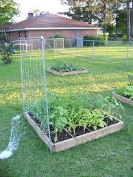 building a trellis gumbo farm