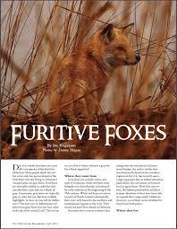 Delaware travel fox images Outdoor delaware magazine dnrec alpha jpg