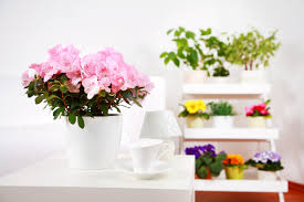 imagenes flores relajantes opau opiniones sobre opau blog archive opau ideas y consejos