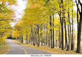 fall color road ohio stock photos u0026 fall color road ohio stock