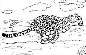 cheetah coloring getcoloringpages