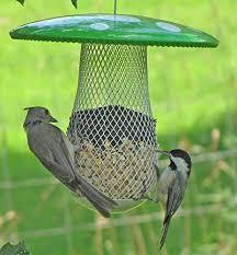 sunflower seed bird food birds of prey