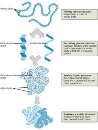 biological molecules biology i