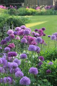 colour purple the colour purple sarah raven