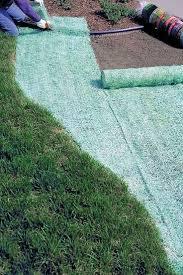 best 25 growing grass ideas on pinterest backyard makeover
