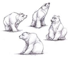 47 best bear images on pinterest bear bear sketch and animal