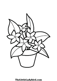 coloring pages coloring pages plants plant in coloring pages