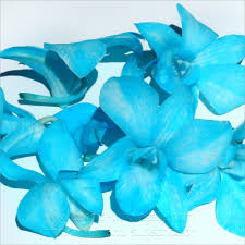 Blue Orchid Flower - loose bloom orchid flowers blue u2013 orchidclub us fresh cut orchid