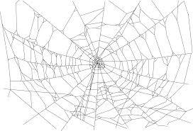 photography spider web wallpapers desktop phone tablet