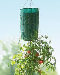 vegetable gardening with disabilities veggie gardener