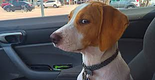 Dog At Vet Meme - the exact moment dogs realized they re going to the vet