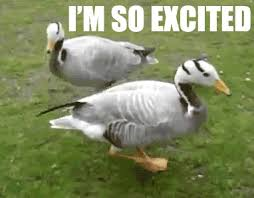 So Excited Meme - animated gifs about duck i m so excited meme found