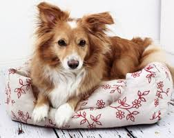 Shabby Chic Dog Bed by Shabby Chic Cat Bed Etsy
