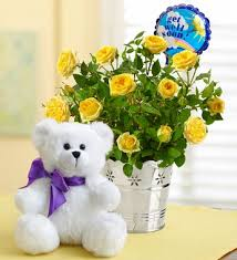 get well soon bears delivery sending flowers to say get well theflowerpost net