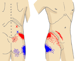 Male Spider Anatomy Abdomen And Kidney Spider Bites Symptoms Human Anatomy Charts