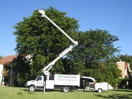 miami tree removal service in miami tree extraction service
