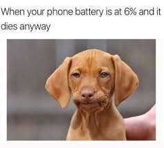 Funny Dogs Memes - 32 dog memes that never stop being funny dog memes memes and dog