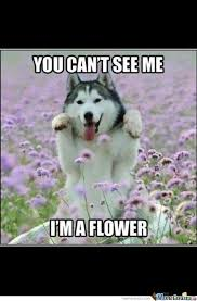 Moon Moon Meme - moon moon 1 i m a flower by mark 6 9 fun meme center