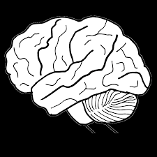 human brain clipart coloring u0026 worksheets
