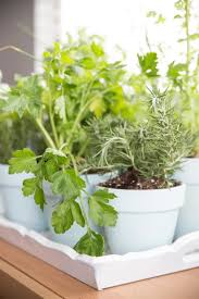 how to make an indoor outdoor herb garden and a basil peach